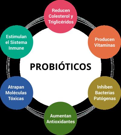 Como tomar probioticos y prebioticos
