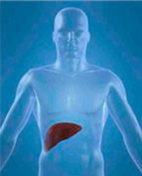 1Detoxificacion hepática ,2  preocupa tanto ? UMEBIR Unidad de Medicina Bioregenerativa